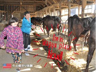 牛(牧場)の餌やり体験